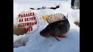 Рыбалка на окуня Куча рыбы
