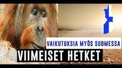 AMAZONIN SADEMETSÄ PALAA | 5 HIRVITTÄVÄÄ SEURAUSTA