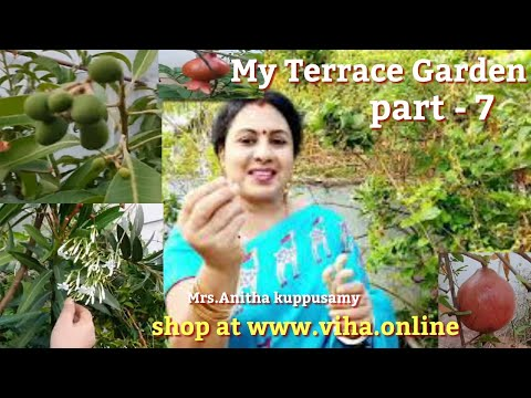 My Terrace Garden Part - 7/எங்கள் வீட்டு மொட்டை மாடித் தோட்டம்/Mrs.Anitha Pushpavanam Kuppusamy
