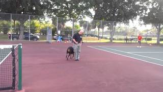 South Florida K-9 Specialist  obedience with distractions.