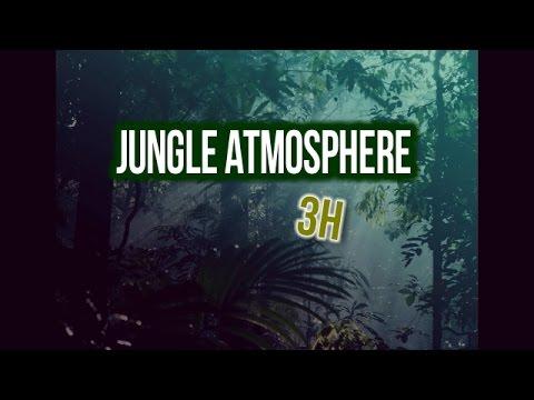 3h JUNGLE atmosphere late night | asmr | nature sound | Jungle Geräusche bei Nacht