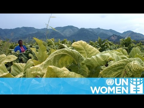 UN Women Stories | Daphne Bayayi - Tobacco Farmer
