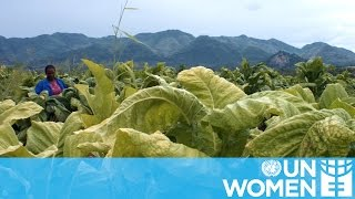 UN Women Stories | Daphne Bayayi - Tobacco Farmer