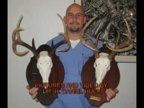 How to Easily Create a European Deer Mount  -SlideShow-