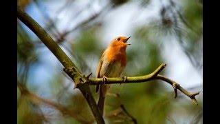 Мое слайд-шоу Красивые птицы. Природа.Лес.