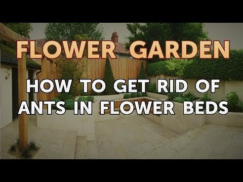 How to get rid of ants in a flower bed