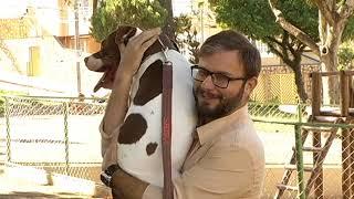 JF: Entenda o comportamento dos cães da raça Pitbull