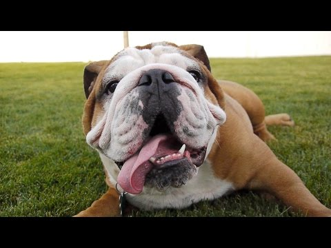 Twenty Dogs | Dog Video for Kids FULL VIDEO | 20 Dogs