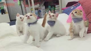 Chú mèo con ♥ Rửa mặt như mèo ♫♫♫ Nhạc thiếu nнi vui nhộn sôi động