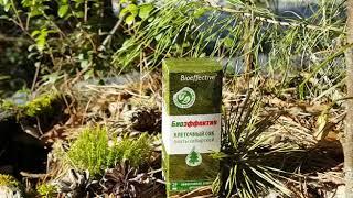 БИОЭФФЕКТИВ КЛЕТОЧНЫЙ СОК ПИХТЫ    Натуральный продукт из сибирской тайги