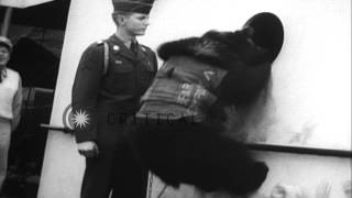 The former mascot of the 6th Infantry in Germany, Private Teddy Bear, arrives by ...HD Stock Footage