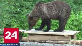 Туристы боятся выходить на улицу из-за медведей