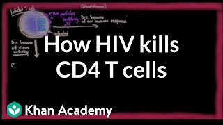 How HIV kills so many CD4 T cells | Infectious diseases | NCLEX-RN | Khan Academy