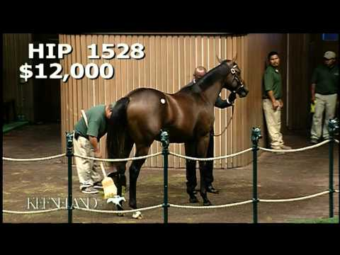 2011 September Yearling Sale - Palace Malice Hip 1528