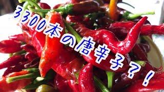 3300本の唐辛子?! thumbnail