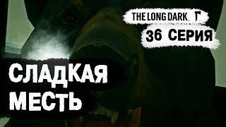 The Long Dark (Долгая тьма). Сладкая месть. 36 серия.