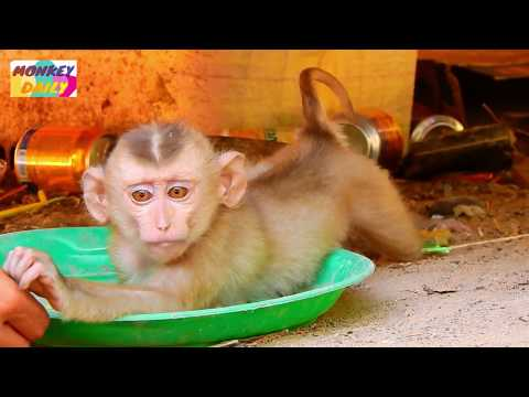 Axel baby do old hobbit got warning by lady | Stop do that Axel see her | Monkey Daily 2754