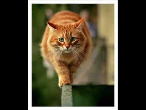 Песня рыжий кот смотреть