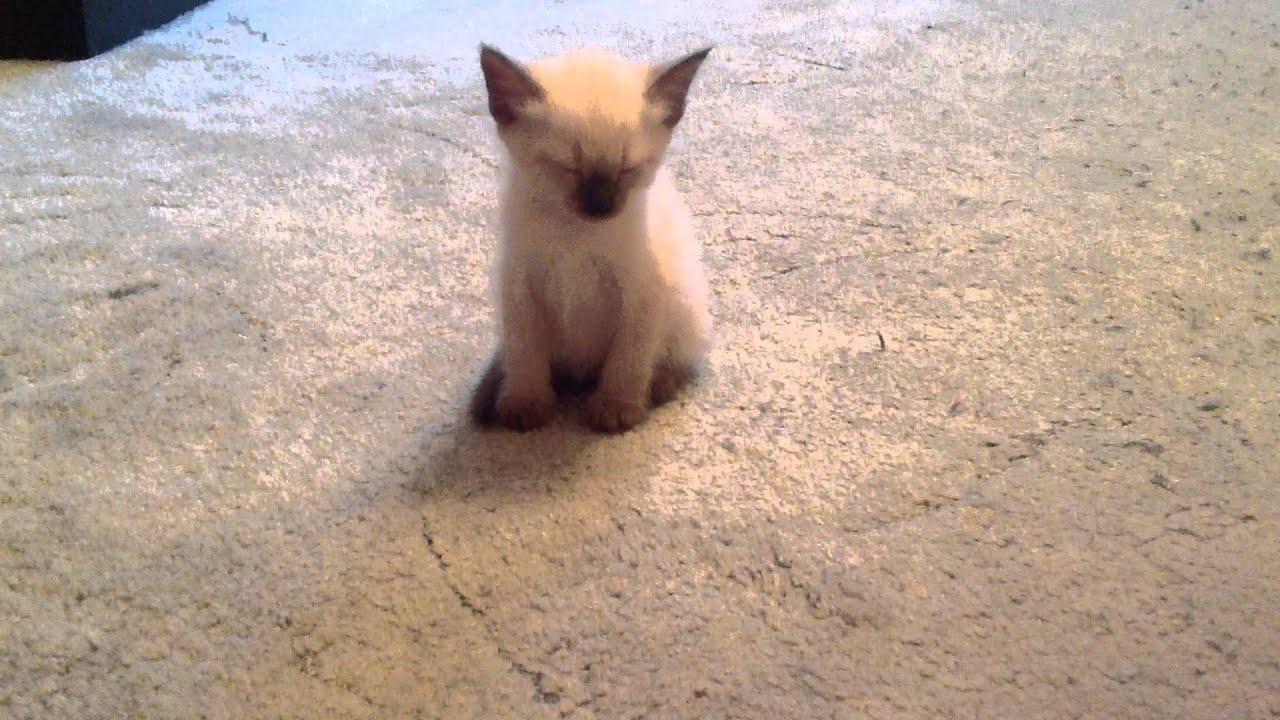 Котенок засыпает (смотреть до конца)))))