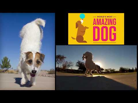 "Vote for Jesse into the Semi-Finals ""World's Most Amazing Dog"""