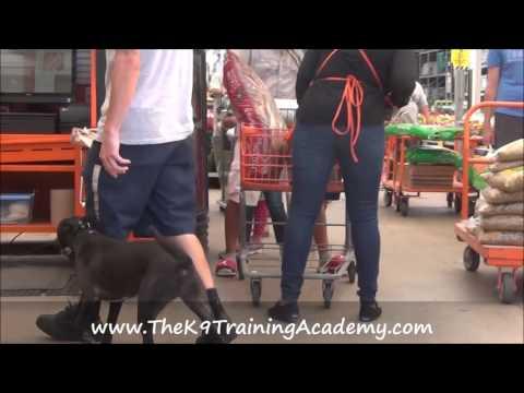 The K9 Training Academy - Penelope - Off Leash Training