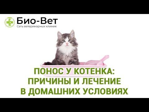 Как вылечить котенка от поноса