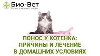 Понос у котенка:  причины и лечение в домашних условиях