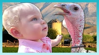 THE MEAN TURKEY! | Look Who
