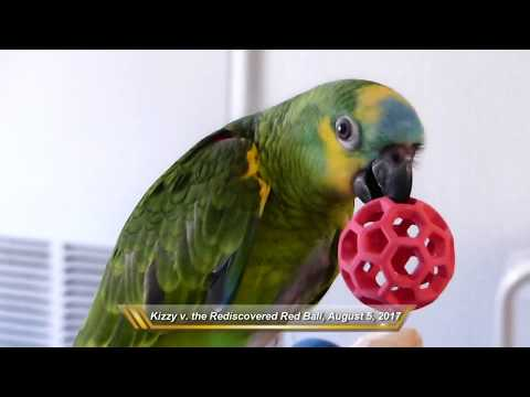 Kizzy the Baby Blue-Fronted Amazon Parrot: August 5, 2017