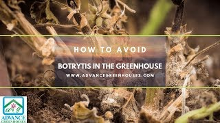 How to Avoid Botrytis in the Greenhouse