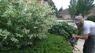 Kevin Masters Certified Arborist- Hedge And Shrub Shaping