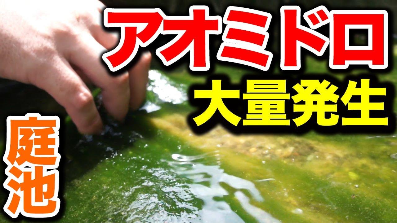 【庭の池】自作滝にアオミドロが大量発生したので駆逐してやる!