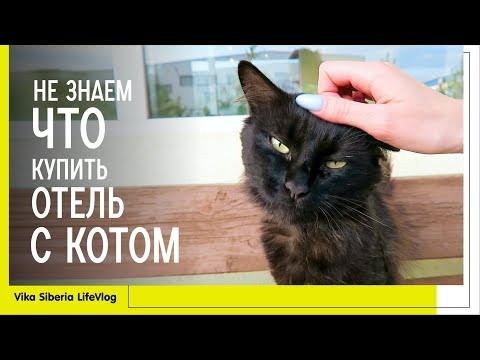 Не знаем, что купить / Отель с котом / ВЛОГ/Vika Siberia LifeVlog