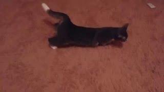 Кошка хочет секса