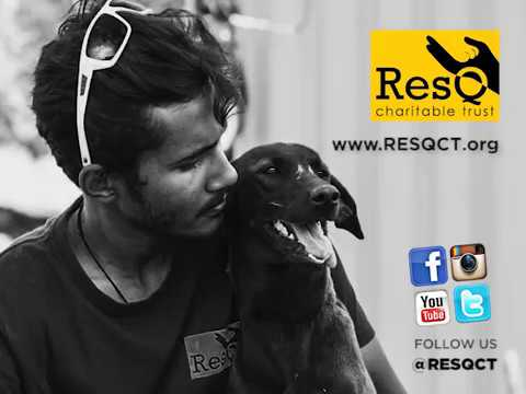 Animal Rescue Webline in Pune, India.