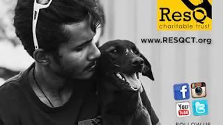 Animal Rescue Webline in Pune, India.
