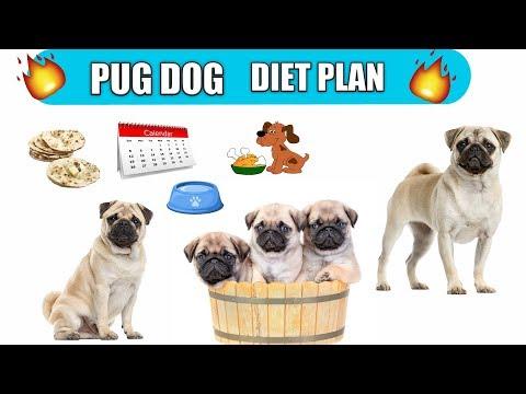 Pug dog diet plan / Pug dog diet chart /  In Hindi / Pug Dog Best Food