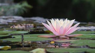 Het leven toelaten tot in je essentie - In gesprek met Anandajay