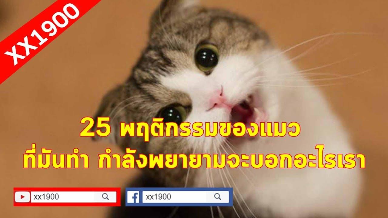 XX1900 V13 l 25 พฤติกรรมของแมวเหมียว ว่าที่มันทำน่ะ กำลังพยายามจะบอกอะไรเราอยู่