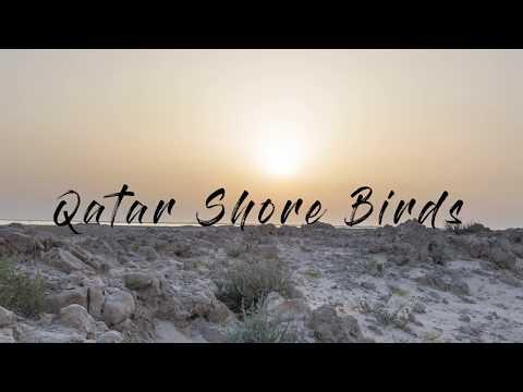 Qatar Shore Birds