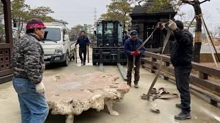 초대형 티크목재 뿌리탁자 옮기기 부제   나무와 함께 …