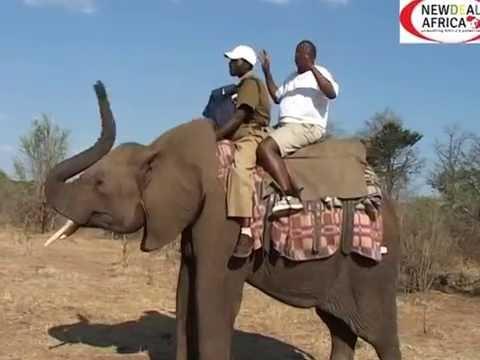 AYOUB   MZEE'S  TRAVEL   GUIDE-Zimbabwe-The  ultimate  tourist  destination
