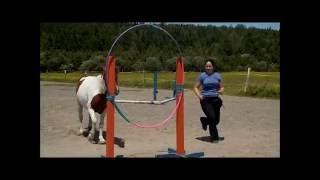 Agilité équine et cerceau de cirque