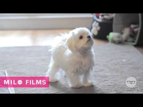 Milo shows his moves for a cookie | 'One Smart Cookie'