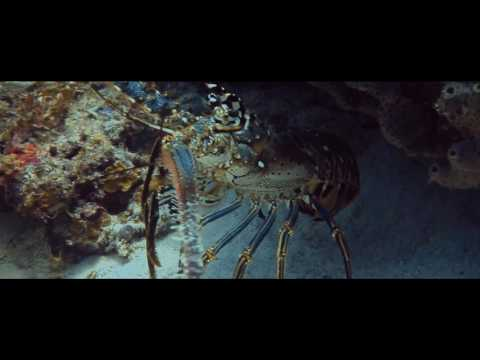 Diving the Dutch Antilles in Bonaire with VIP Diving