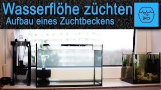 Wasserflöhe züchten und verfüttern - Lebendfutter selber machen - Aufbau eines Daphnia Zuchtbeckens