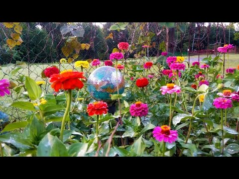 How To Grow A Beautiful Zinnia Flower Bed! No Green Thumb Needed! Easy To Do During Quarantine!