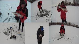 БЕШЕНЫЙ КЛЁВ ЩУКИ НА ЖЕРЛИЦЫ ловля на живца рыбалка