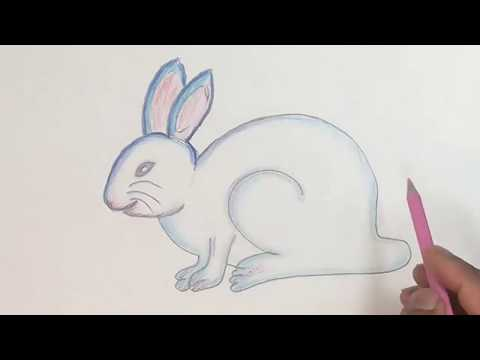 How To Draw Rabbit Step By Step (color Pencil)