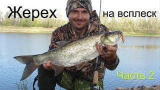 Ловля жереха на сплеск р. Прип'ять 2015 Білорусь Частина 2. Fishing for asp on splash part 2. GoPro